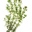 Thyme - Thymus vulgaris — Stock Photo #11005771