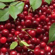 Sour cherries — Stock Photo #11378087