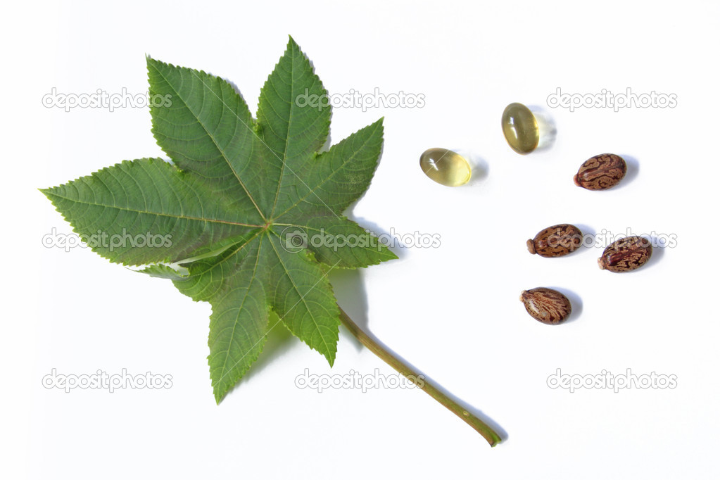 One leaf of the castor plant, before a white background with castor oil capsules for oral use in cases of constipation and some seeds  Stock Photo #11477580
