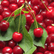 Sour cherries — Stock Photo