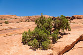 Arches national park in Utah — Stock Photo