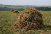 A hay is in stacks — Stock Photo