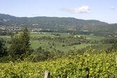 Viniculture — Stock Photo