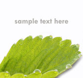 Green Leaf with dewdrops (isolated white background) — Stock Photo