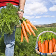 Royalty-Free Stock Photo: Proud carrot farmer picking fresh carrots in his basket