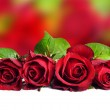 A Beautiful red rose background — Stock Photo