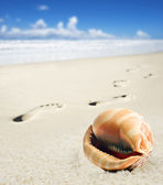 Sea shell and foot prints on a sandy beach — Stock Photo