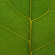 Natural background texture of green leaf — Stock Photo