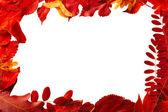 Armature est faite de feuilles d'automne naturel rouge — Photo