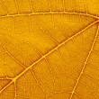Natural background texture of yellow autumn leaf — Stock Photo