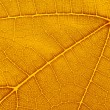 Stock Photo: Natural background texture of yellow autumn leaf