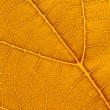 Natural background texture of yellow autumn leaf — Stock Photo #11329561