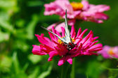 Beautiful butterfly sits on red flower — Stock Photo