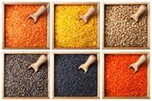 Collection of lentils in a wooden boxes — Stock Photo