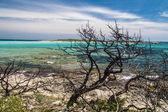 Playa de piantarella cerca de bonifacio, corse, france — Foto de Stock