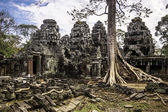Tree in Ta Phrom, Angkor Wat, Cambodia, South East Asia. — Fotografia Stock