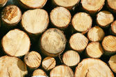 Timber lumber balk beam short — Stock Photo