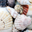 shells — Stock Photo