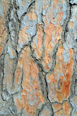 Casca de textura de madeira abstrato — Fotografia Stock