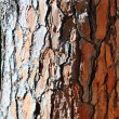 Abstract Wood Texture Bark — Stock Photo