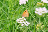 Flowers and butterfly — Stock Photo