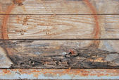 Decayed wood tissue — Stock Photo