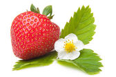 Fresh strawberry with flower on isolated white — Stock Photo