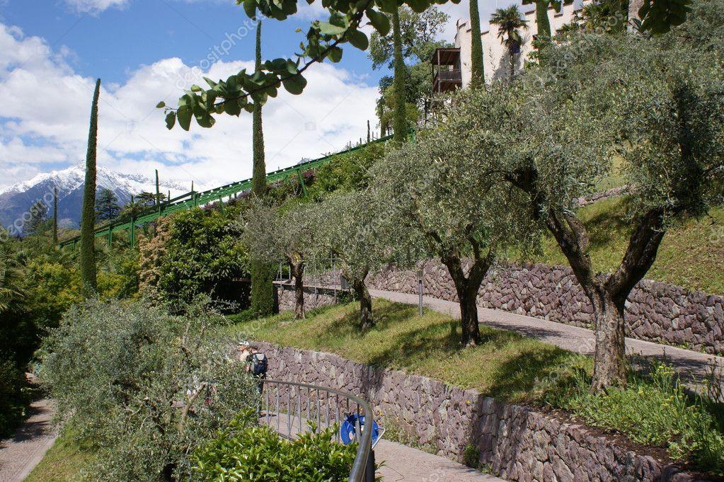 Ulivi secolari foto stock edith60 11269428 - Giardino con ulivi ...