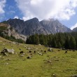 Mountain meadow in the Sarntal Alps - Stock Photo