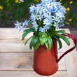 Blue flowers in red vase — Stock Photo