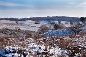 холмы в снегу в нидерланды — Стоковое фото