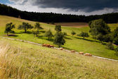 Sunny pasture before storm — Stock Photo