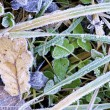 Grass frost — Stock Photo #11380593