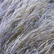 Grass frost — Stock Photo