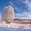 Landscape with frozen tree - Stock Photo