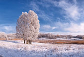 Landscape with frozen tree — Stock Photo