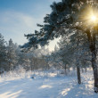 Stock Photo: Beautiful winter morning