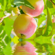 Apples reflection on water — 图库照片