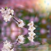 Fundo bonito com flor — Foto Stock