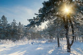 Beautiful winter morning — Stockfoto