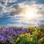 Flower meadow and majestic clouds — Stock Photo