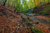 Staré dřevo suché stromy — Stock fotografie