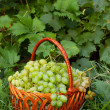 Stock Photo: Green grapes in wicker basket