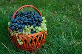 Winogron w wiklinowym koszu — Zdjęcie stockowe