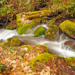 Appalachian Stream in the Spring — Stock Photo