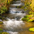 Mountain Stream on a spring morning — Stock Photo