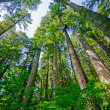Sunny day in the Coastal Redwoods — Stock Photo