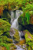 Hidden Falls in a fern Grotto — Stock Photo