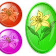 Flower lily, buttons — Stock Photo