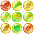 Stock Photo: Leaves buttons, set